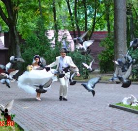 www.kadr32.ru Горбачук Сергей пофесс. фотограф на свадьбу в Брянске FuLL HD видео съёмка (88)